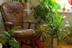 plant-corner-in-home