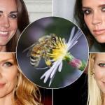 Rolul veninului de albine in produsele cosmetice. Beneficii